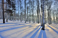 Winter Landscape - Sunset In The Birch Grove. Stock Image - 94812531