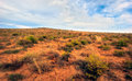 Steppe. Stock Images - 94857554