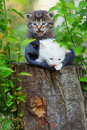 Kittens Royalty Free Stock Images - 9490019