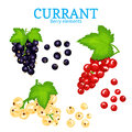 Vector Set Of A Fresh Currant. White Black And Red Berries One By One And Groups On Branches And Leaves. Collection Of Royalty Free Stock Photo - 94996155