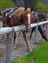 Horse Putting Best Foot Forward Stock Image - 957451