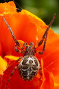 Spider Stock Images - 9504244