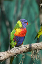 Colorful Red Blue Green Bird Stock Photo - 9505320