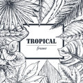 Vector Template With Frame Of Hand Drawn Tropical Plants. Stock Images - 95066804