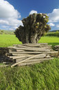 Felled Tree Royalty Free Stock Image - 9510916