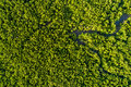 Aerial Mangrove Forest Top View Royalty Free Stock Photo - 95206675