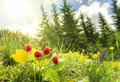 Wild Strawberries Bush  In A Summer Forest Decor Stock Images - 95288144