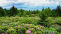 Roan Mountain State Park North Carolina Royalty Free Stock Images - 95394179