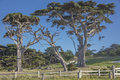 CypressTrees Along 17 Mile Drive Near Fanshell Overlook California Royalty Free Stock Images - 95481929