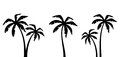 Set Of Palm Trees. Vector Black Silhouettes. Stock Photos - 95525313