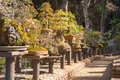 Potted Pine Tree For Garden Decoration,garden Landscaping Beauty Stock Image - 95604591