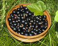 Black Currant Royalty Free Stock Photography - 95634007