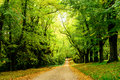 Path In The Woods Stock Photography - 95647382