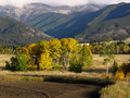 Aspens In A Meadow, Montana Royalty Free Stock Image - 9572816