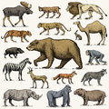 Gorilla, Moose Or Eurasian Elk, Camel And Deer, Rhinoceros. Hare, Wolf And Bear With Lion And Tiger Engraved Hand Drawn Royalty Free Stock Image - 95732576