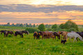 Horses Grazing In The Meadow At Sunset Royalty Free Stock Photos - 95738578