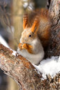 Squirrel On The Branch Royalty Free Stock Photography - 9581447