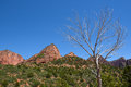 Dead Tree Kolob Canyons Zion Stock Photo - 95801830