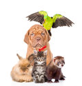 Group Of Pets Together In Front View. Isolated On White Background Royalty Free Stock Photos - 95836398