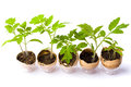 Plant Breeding In Eggshells. Organic Product Stock Photography - 95838202