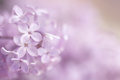 An Abstract Pink Purple Floral Background. Stock Images - 95927454