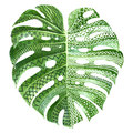 Monstera Plant Leaf With Ethnic Ornaments Royalty Free Stock Image - 95959556