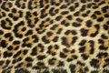 Leopard Fur Texture Royalty Free Stock Photography - 9604017