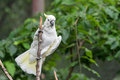 White Cockatoo In Tree Stock Photography - 96092072