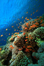 Coral Reef And Tropical Fish Stock Photos - 9614113