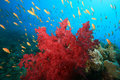 Coral Reef And Tropical Fish Stock Images - 9616024