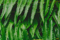 Raw Bracken Greenery Forest Pattern Background Royalty Free Stock Photography - 96107357