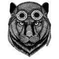 Panther Puma Cougar Wild Cat Wearing Aviator Hat Motorcycle Hat With Glasses For Biker Illustration For Motorcycle Or Stock Photography - 96152132