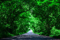 Landscape Of Straight Road Under The Trees.Green Tunnel And An Empty Asphalt Road Stock Photos - 96243853