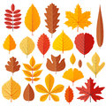 Set Of Tree Autumn Leaves Isolated On The White Stock Image - 96247131