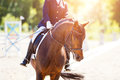 Bay Horse With Rider At Dressage Competitions Royalty Free Stock Photo - 96251805