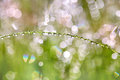 Drops On The Plants After Rain. Morning Light And Beautiful Boke Royalty Free Stock Photos - 96256168