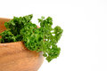 Curly Parsley With White Background Stock Image - 96297701