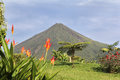 Arenal Volcano With Flowers. Royalty Free Stock Image - 96343096