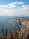 Dead Burned Trees At Lake Butte View Above Yellowstone Lake In Yellowstone National Park In Wyoming Royalty Free Stock Images - 96370259