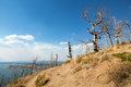 Dead Burned Trees At Lake Butte View Above Yellowstone Lake In Yellowstone National Park In Wyoming Royalty Free Stock Photography - 96370647