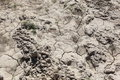 Dried Earth Royalty Free Stock Photography - 9640027
