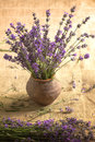A Bouquet Of Lavender In A Vase Stock Photos - 96466733