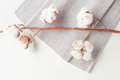 Cotton Plant Flower Branch On White Background Stock Image - 96467091