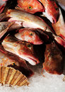 Fresh Sea Food Royalty Free Stock Image - 9650566