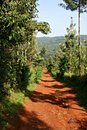 Lonely Dirt Path Royalty Free Stock Photography - 9654027
