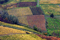 Italian Vineyards In Oltrepò Pavese Stock Images - 9656334