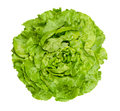 Butterhead Lettuce From Above Over White Stock Photos - 96536523