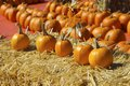 Lot Of Orange Pumpkins Out Of Doors Royalty Free Stock Photography - 96546137