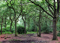 Clearing In An Oak Woodland Forest With Green Trees Royalty Free Stock Images - 96609459