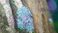 Blue Lichen Royalty Free Stock Photography - 96629277